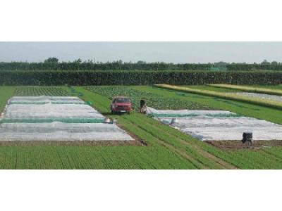 Агроволокно для посевов. Отправьте полиэтиленовую пленку на пенсию